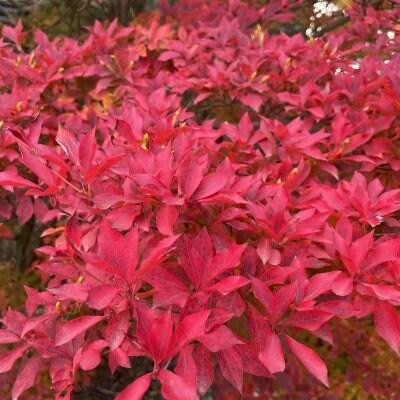 小豆島まるごとマルシェProject/小豆島まちづくり商社