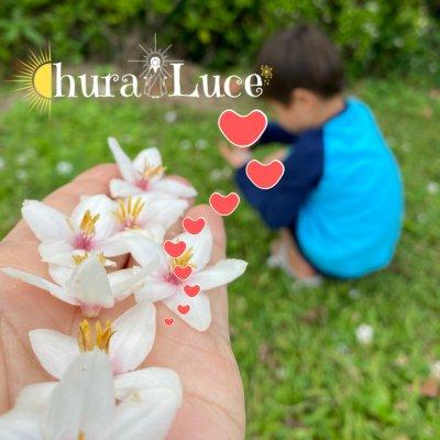 Chura Luce