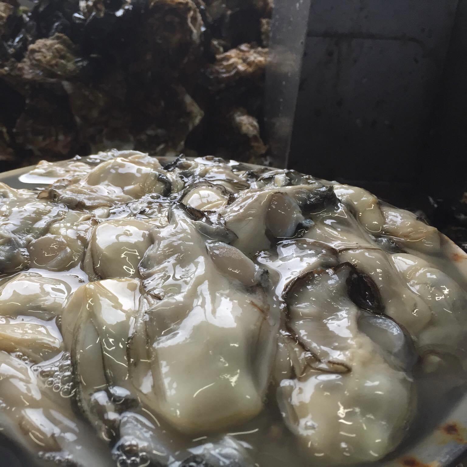 荒波牡蠣復活委員会_荒波牡蠣漁師_剥きカキ