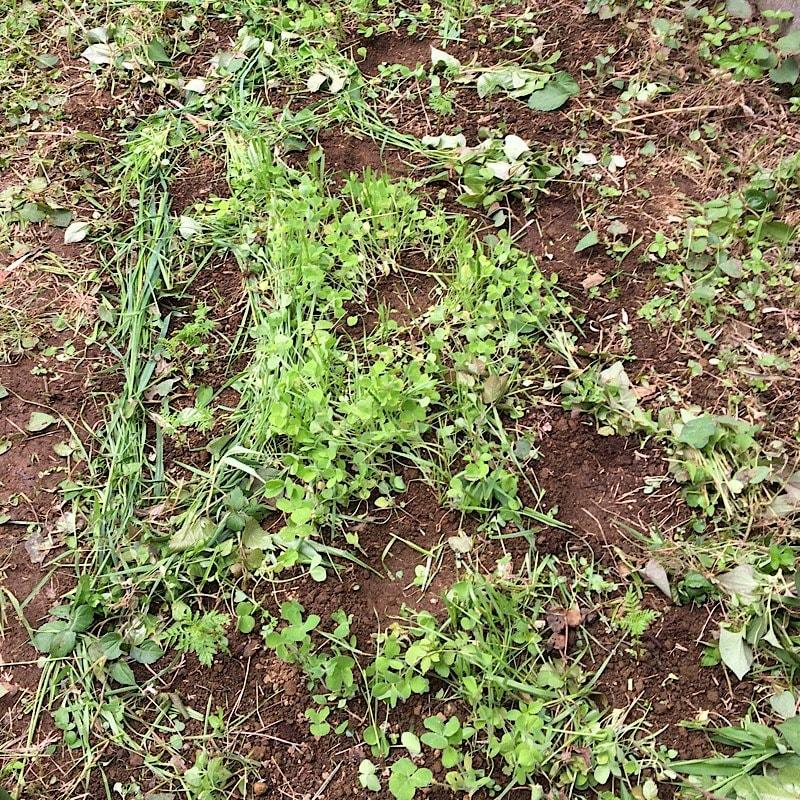 お庭に小さな菜園作り−3-3