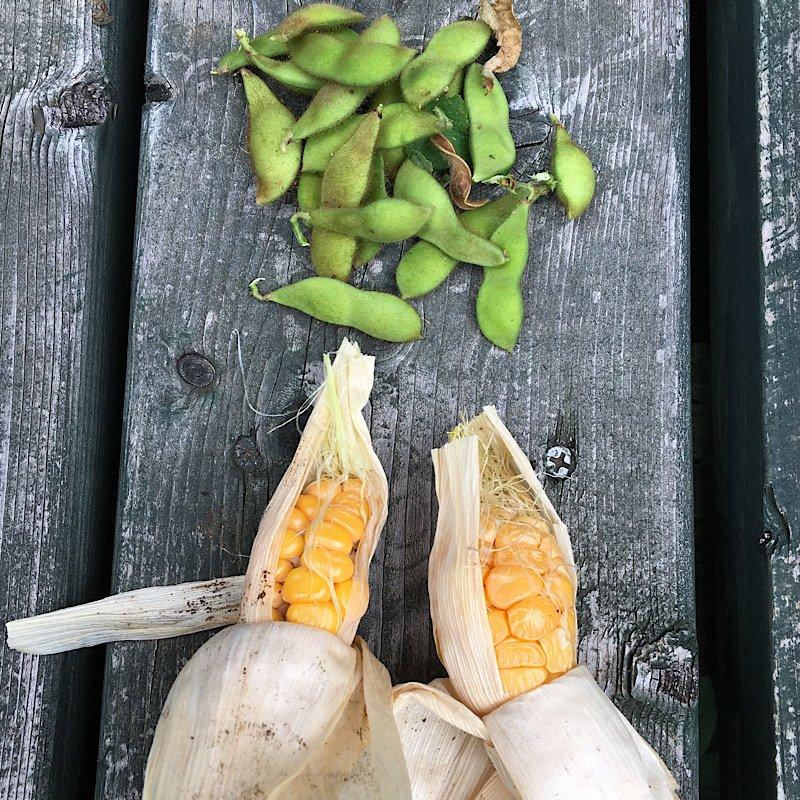 9月1日〜小さな菜園作り〜