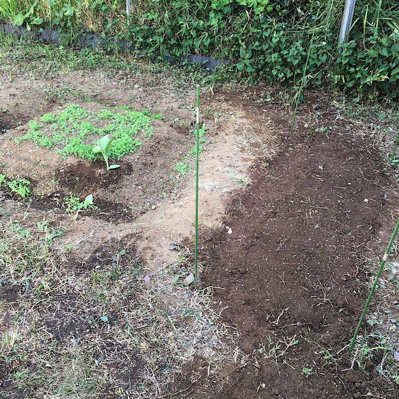 お庭に小さな菜園作りー2