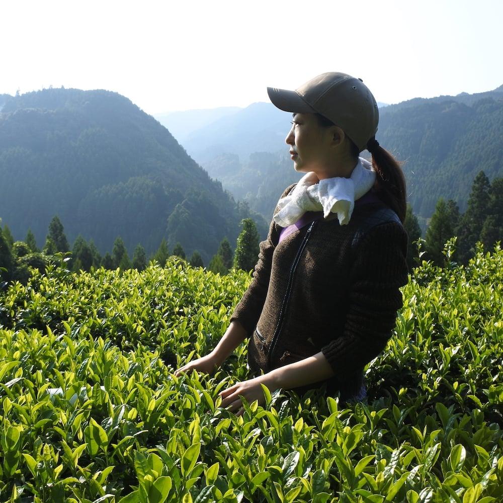 人里離れた山の上で育つオーガニックティー|Japanese Organic Mountain Tea