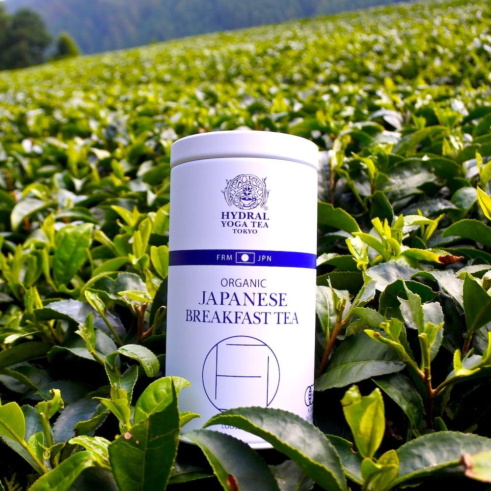 オーガニック抹茶と一番煎茶のブレンド|Blend of Matcha & Green Tea 1st Flush