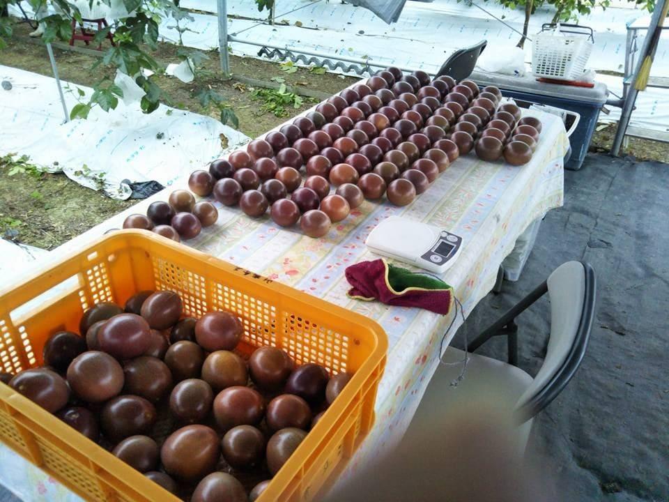 NaturalPassion沖縄 無農薬パッションフルーツ