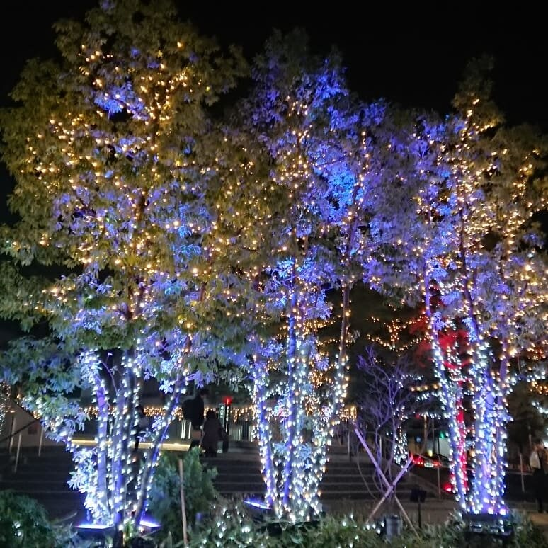 東京セミナー参加時の夜景1