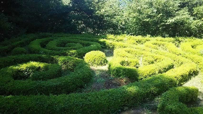 夏のフランス庭園