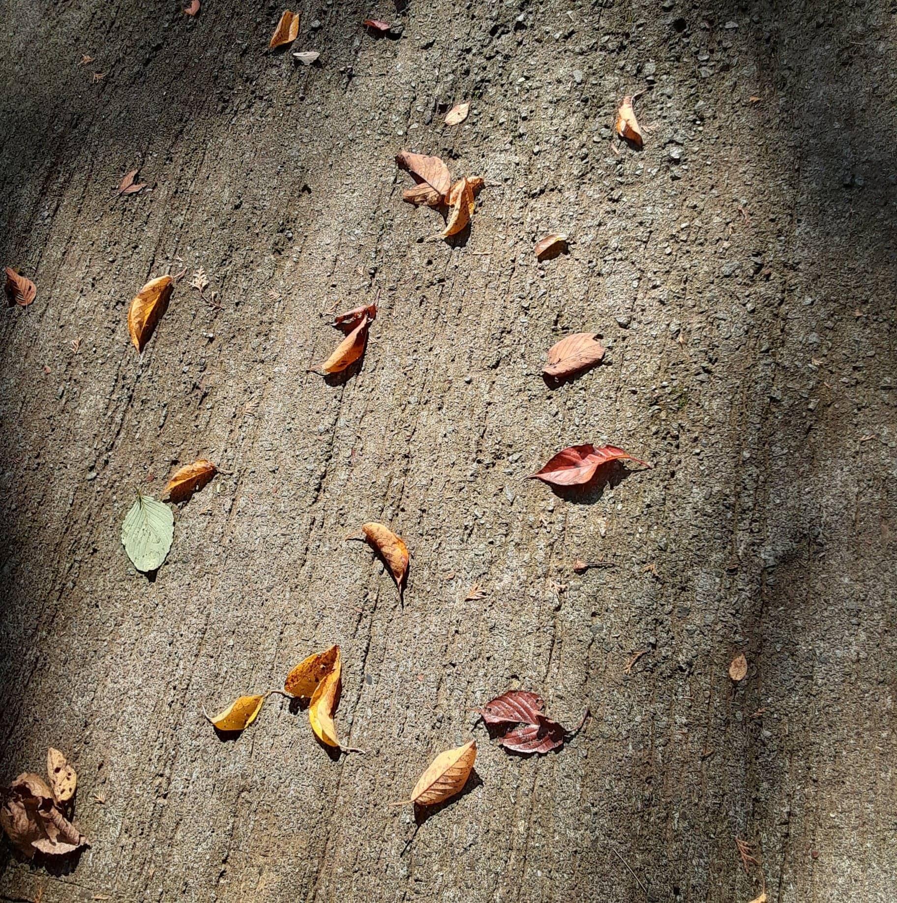ハルカスガーデンの落ち葉