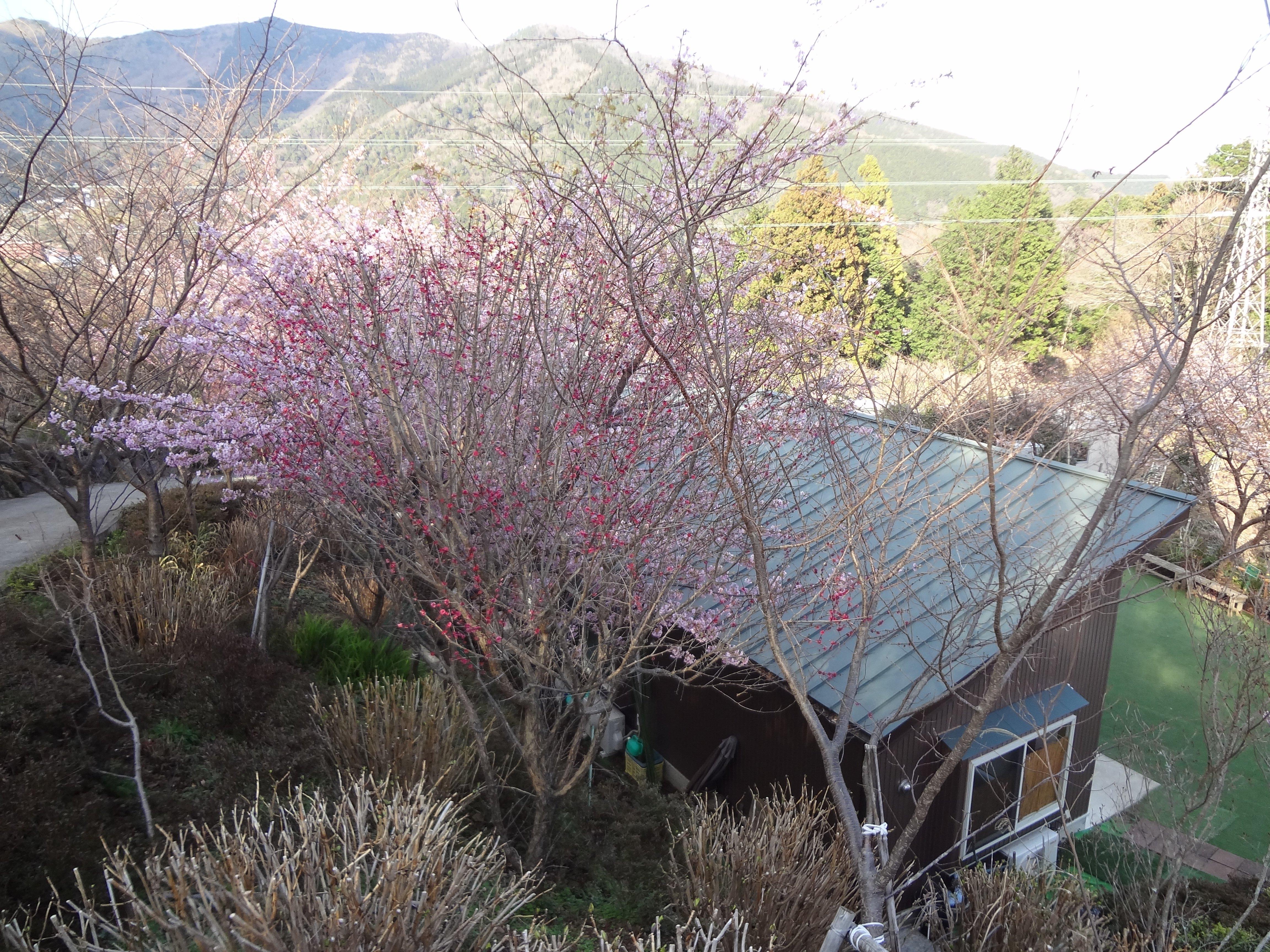 花影に隠れる ハルカスガーデン休憩所の緑の屋根