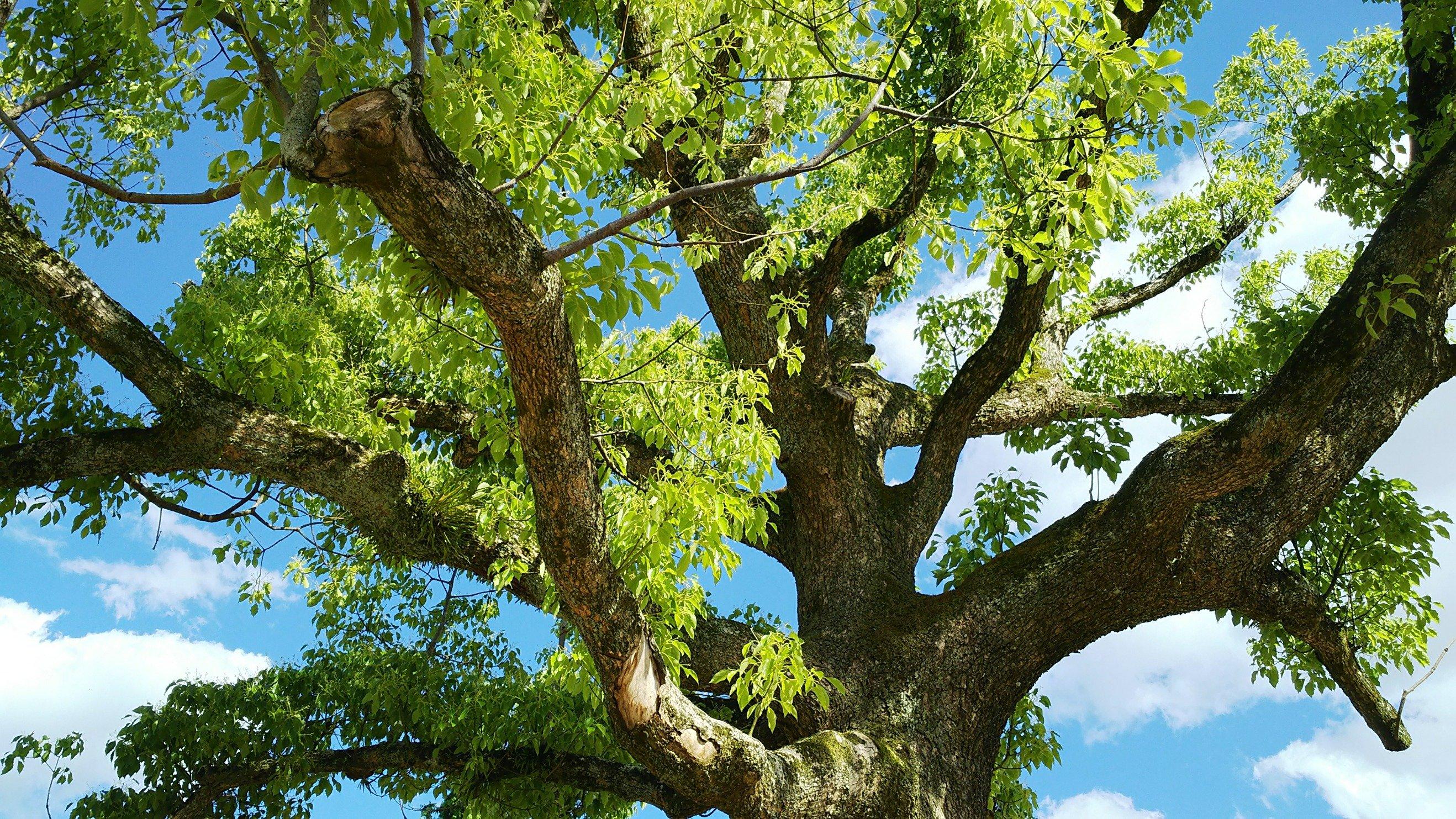 ひとより長くここを見つめる樹