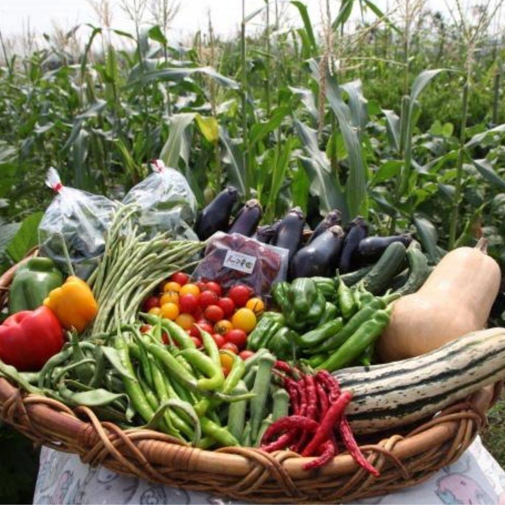 【無農薬・無化学肥料】野菜セット