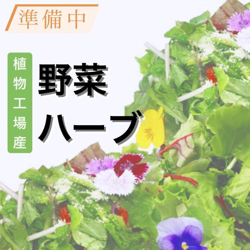 植物工場産野菜・ハーブ・エディブルフラワー