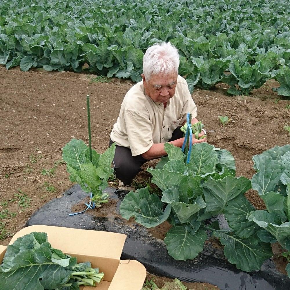 市川さんケール収穫