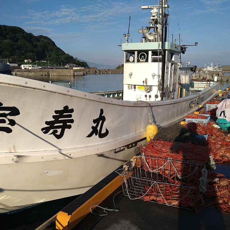 能生港に着すぐ水揚げ、選別作業に移ります。