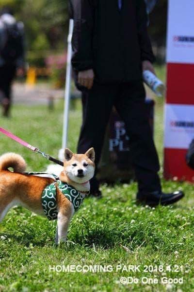 Angel's Tale カートラジャパン初日限定 保護犬応援 お得なチャリティーチケットのイメージその4