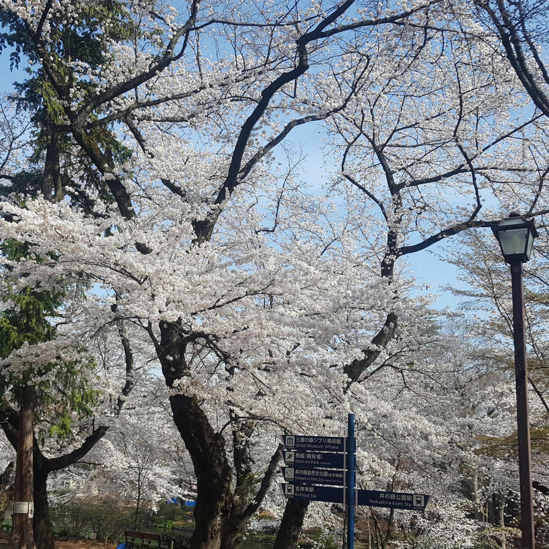 4/7(土)19:30~溜池山王桜の季節食事スイーツ付き交流イベント20名限定のイメージその1