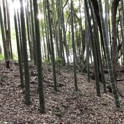 竹林管理と竹炭づくりWS