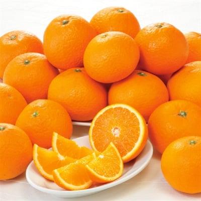 <ご予約>和歌山県産「木熟清見オレンジ」約3kg(12〜19玉)