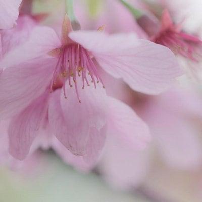 車のお手入れ~花粉のシミ取り【Mサイズ(プリウス、インサイト、キューブなど)】~