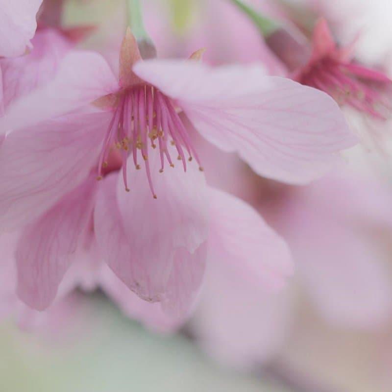車のお手入れ~花粉のシミ取り【Sサイズ(アクア、フィット、ノートなど)】~のイメージその1