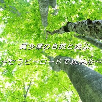 奥多摩の自然と遊ぶ〜セラピーロードで森林浴〜
