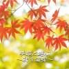【11月25日(土)開催】紅葉の筑波山トレッキング