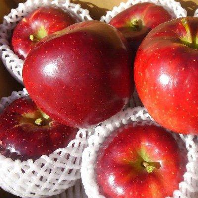 長野県須坂市有機栽培りんご『秋映』15kg