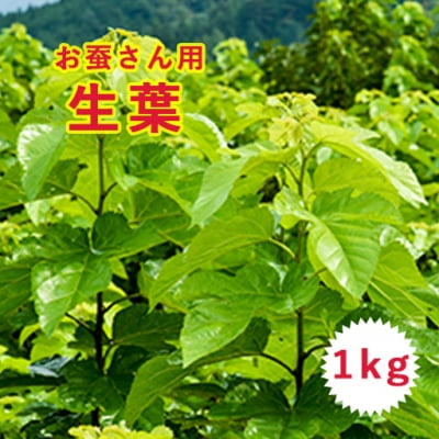 【お蚕さんへ】桑の生葉1kg クール便送料込み