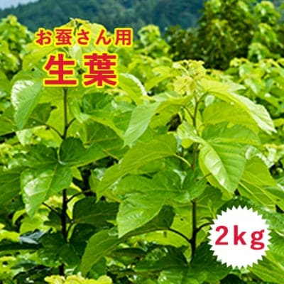 【お蚕さんへ】桑の生葉2kg クール便送料込み