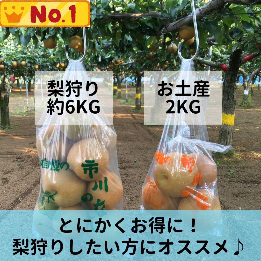 梨狩りチケット[9/13予約用]梨狩り袋(約6㎏)&お土産梨袋(2㎏)セットのイメージその3