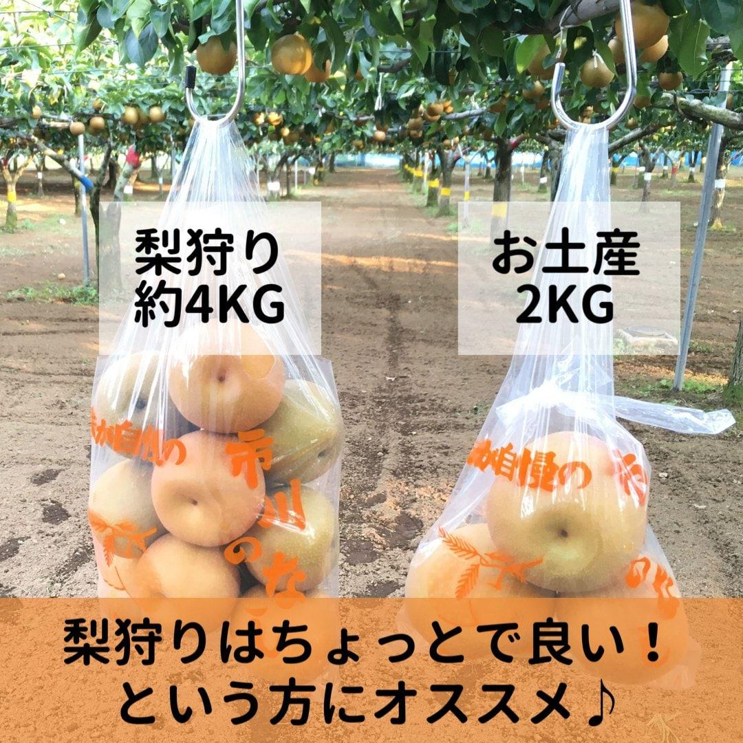 梨狩りチケット[8/22予約用]梨狩り袋(約4㎏)&お土産梨袋(2㎏)セットのイメージその3