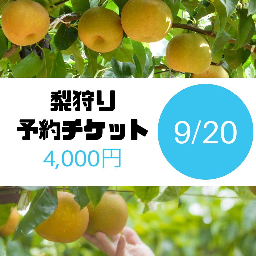 梨狩りチケット[9/20予約用]梨狩り袋(約6㎏)&お土産梨袋(2㎏)セットのイメージその1