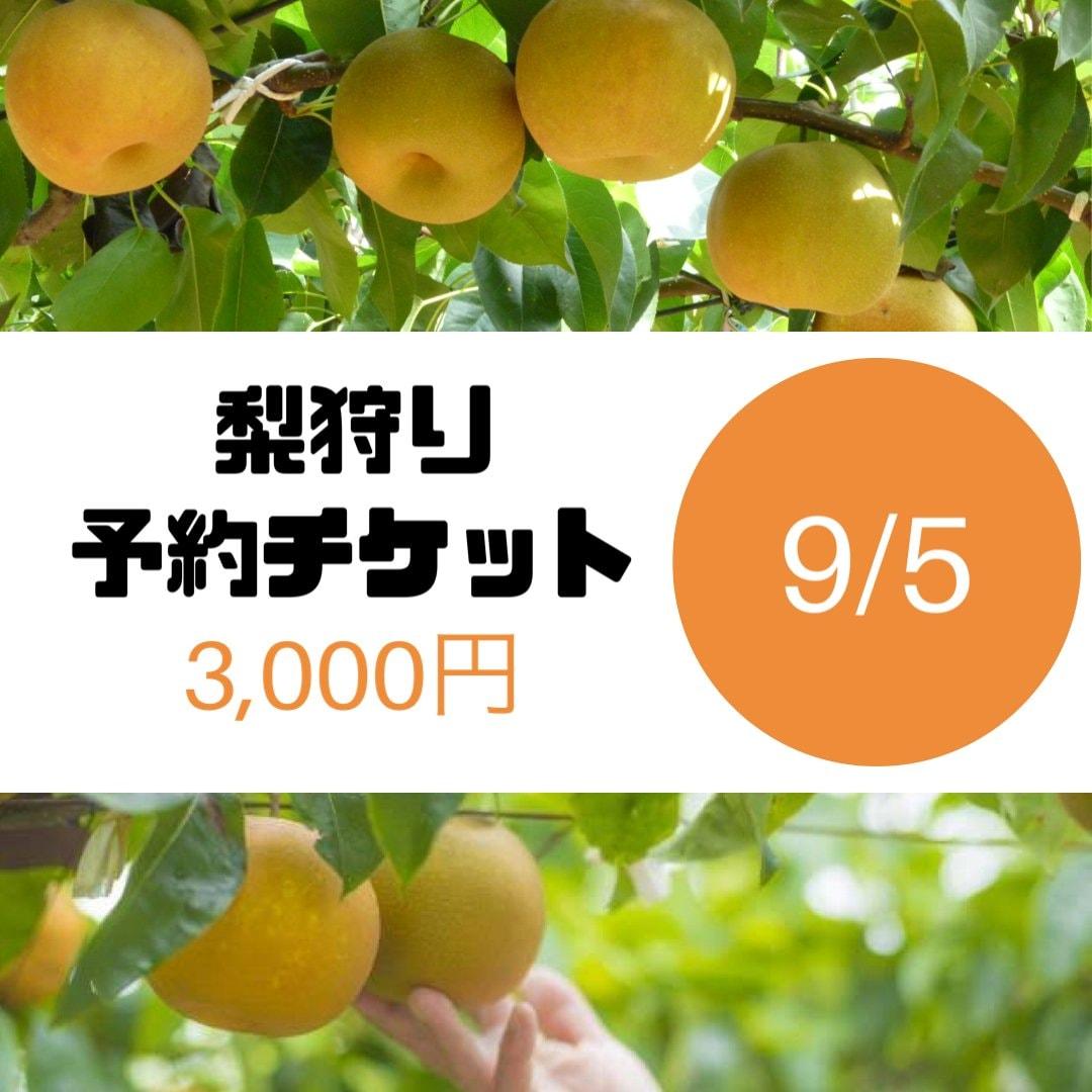 梨狩りチケット[9/5予約用]梨狩り袋(約4㎏)&お土産梨袋(2㎏)セットのイメージその1