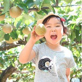 〜梨狩り体験〜 旬の梨をご自身で収穫してみてください♪ 梨狩り袋(約6㎏前後)&お得用梨袋(約2㎏)セットのイメージその2