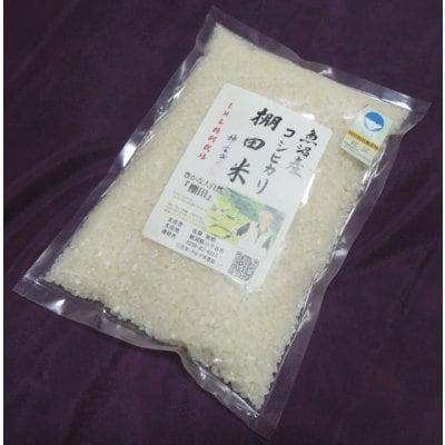お土産に最適/500g(3合)魚沼産コシヒカリ/棚田米