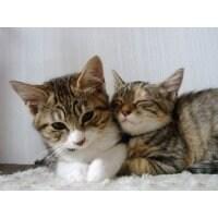 【終了】動物をアレルギーや病気から救う方法 1月7日(土)開催 ペットシャンプーサンプルのお土産付きです