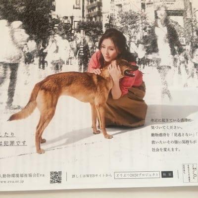 杉本彩 公益財団法人動物環境・福祉協会Eva ペット募金