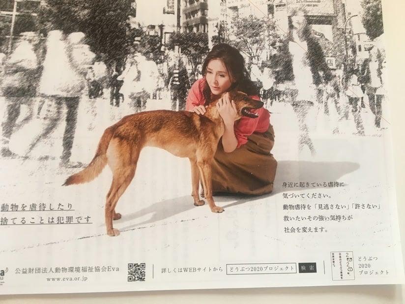 杉本彩 公益財団法人動物環境・福祉協会Eva ペット募金のイメージその1