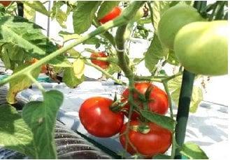 【選べる野菜カプセルAグループ】水やり放ったらかしで安全野菜を自分で簡単に作れたら良くないですか、 水やりの心配が無い、手間いらずで出来るオーガニックプランター 水やり心配なし、放ったらかしで安心野菜が どんどん育つ世界初の新技術 電源は不要!自動野菜栽培システム お好きな野菜の種を選んで頂けます。 健康リフォーム