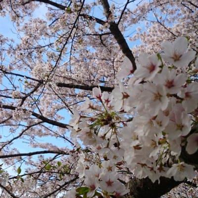 「サレンダー・瞑想キャンプ」第2回 5月8日(土)〜11日(火)