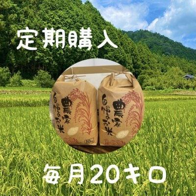【定期購入】兵庫県産(コシヒカリ)こだわりの米(20㎏)!整骨院の先生...