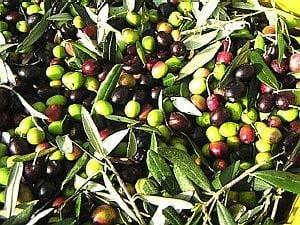 【店頭払いのみ】アサクラの無農薬オリーブオイルの使い方教室(五感を呼び覚ます料理教室)