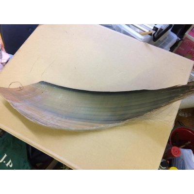シロナガスクジラの鬚