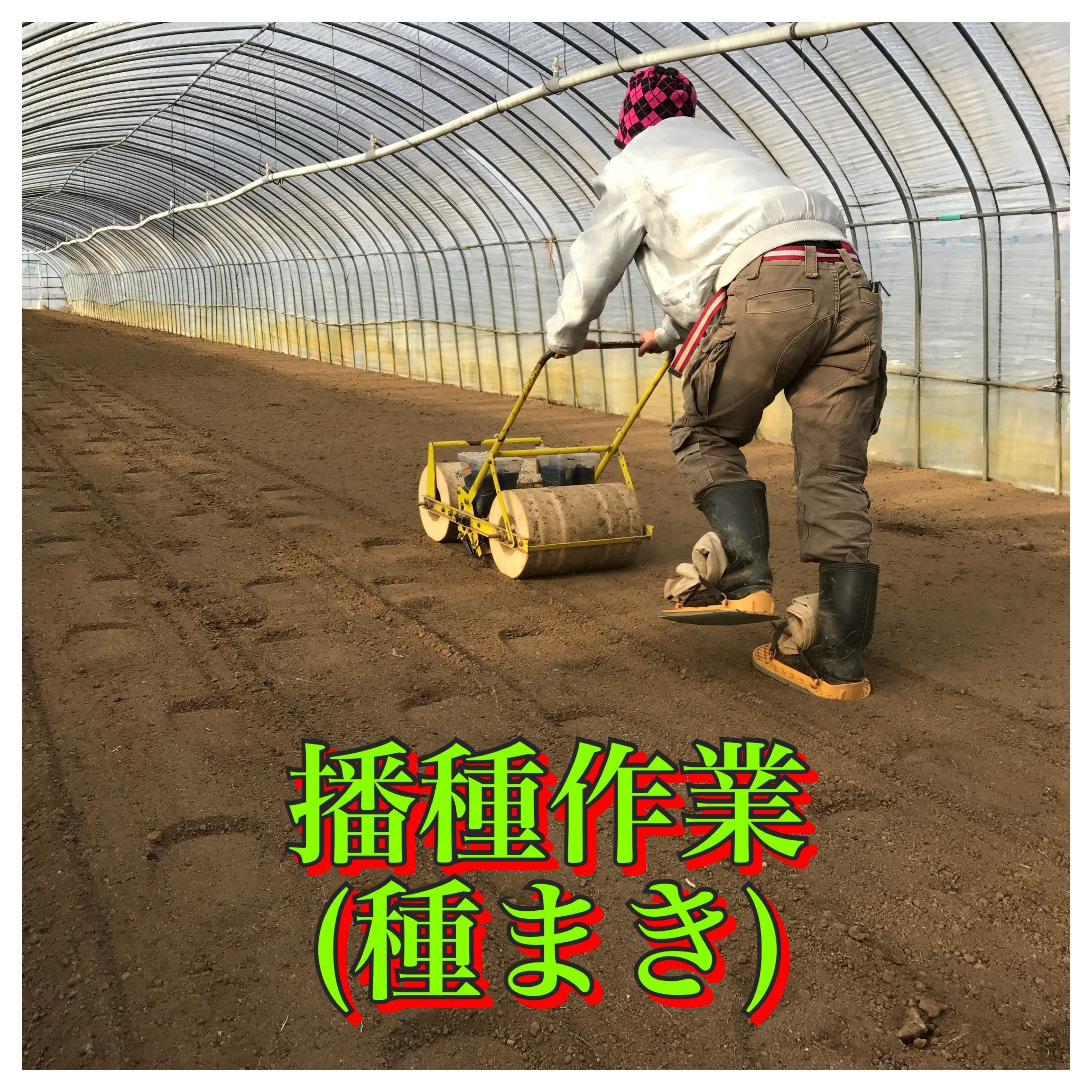 【大分県中津市/農業体験】『ランチ・おみやげ付き』つるちゃんの命の授業のイメージその3