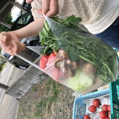 無農薬野菜詰め放題