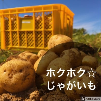 送料無料/業務用/自宅用/ジャガイモ男爵芋10キロ入り