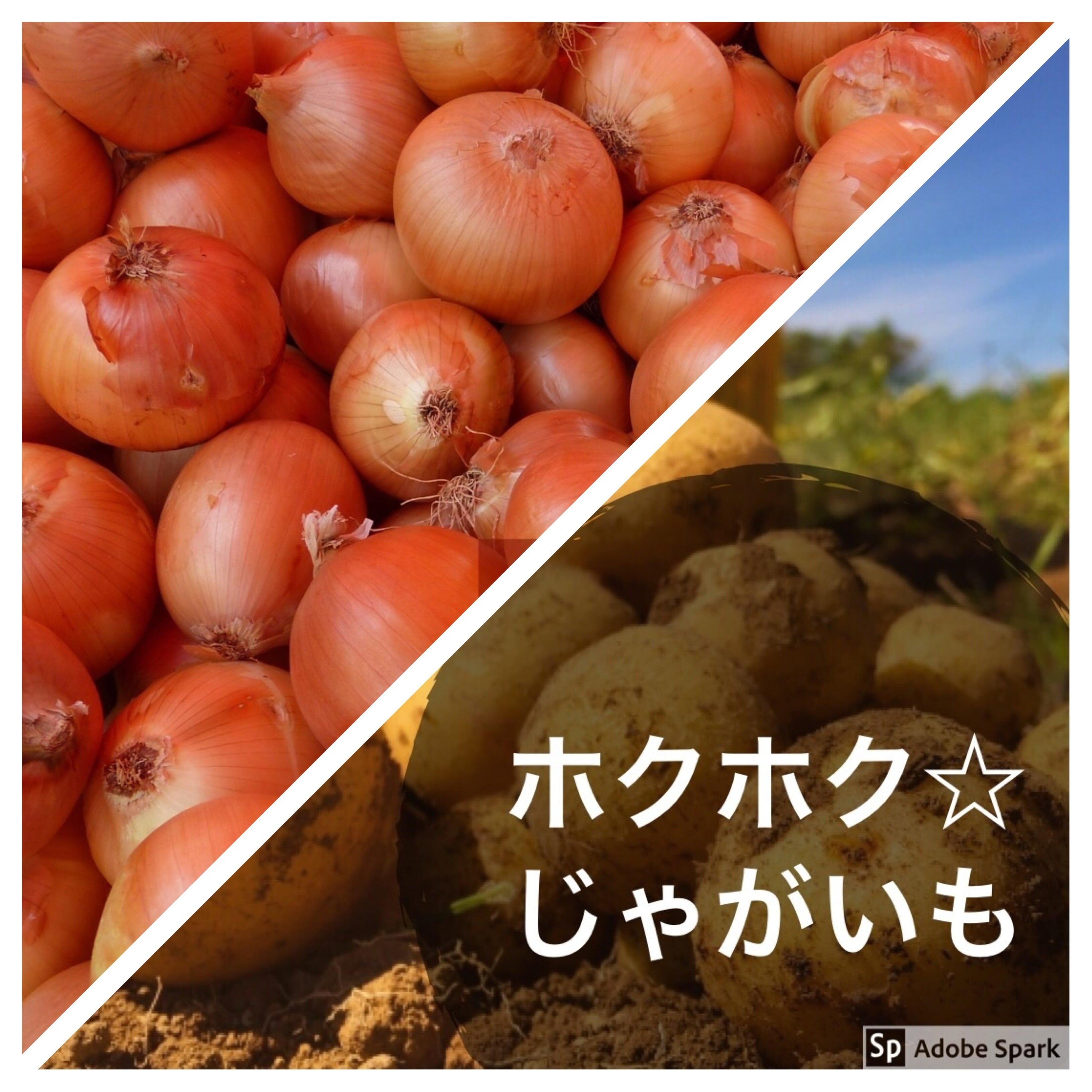 本間様専用ジャガイモ☆玉ねぎ現地払いのイメージその1