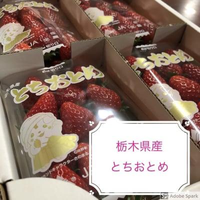 栃木県産イチゴとちおとめ8パックセット