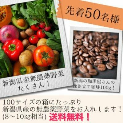 7月24日より発送予定!送料無料!新潟県減農薬野菜&挽きたて珈琲詰め合わせ!