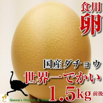 数量限定!【国産ダチョウ】世界一大きなダチョウの卵